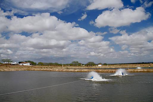 Chapada Diamantina ganha 160 viveiros para criação de peixes