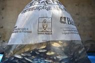 Produtores rurais de Valença recebem 50 mil alevinos de tilápias