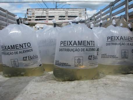 O programa de peixamento da Bahia Pesca (empresa vinculada à Secretaria de Agricultura) continua gerando mais comida na mesa e oportunidades de renda aos produtores baianos.