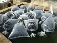 Produtores rurais de Iguaí recebem 60 mil alevinos de tambaqui
