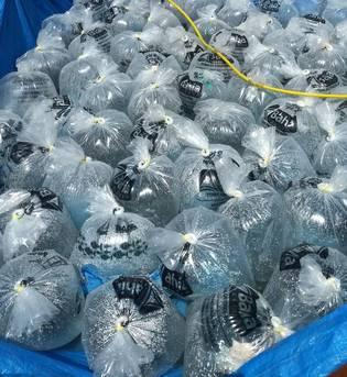 O programa de peixamento da Bahia Pesca, empresa vinculada à Secretaria de Agricultura da Bahia do Estado (Seagri), continua impulsionando a piscicultura no interior baiano.