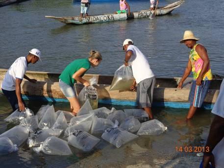19Mangues de Santo Amaro recebem um milhão de filhotes de caranguejos