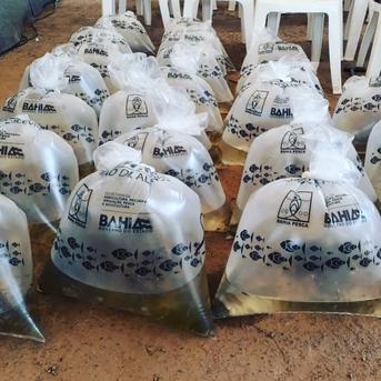 Produtores de Mata de São João recebem capacitação e peixes